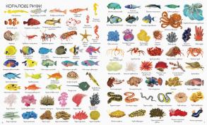 1000 назв підводного світу. Фото 4