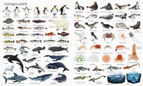 1000 назв підводного світу. Фото 3
