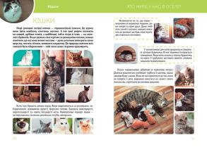 Велика книга про тварин . Фото 2