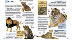 Ілюстрована дитяча енциклопедія у запитаннях і відповідях. Фото 2