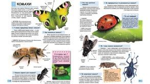 Ілюстрована дитяча енциклопедія у запитаннях і відповідях. Фото 4