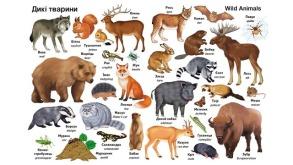 Перші слова. Тварини + англійська. Фото 3