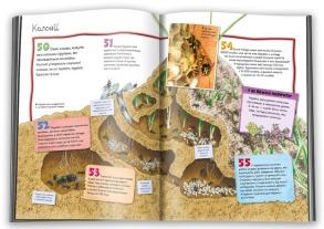 100 фактів про комах та інших безхребетних. Фото 3