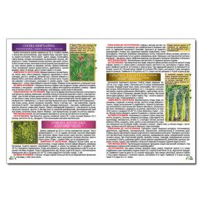 Повний атлас лікарських рослин. Фото 4