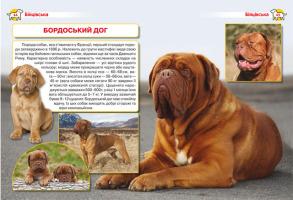 Енциклопедія. Собаки. Фото 2