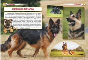 Енциклопедія. Собаки. Фото 3